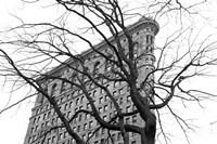 Flatiron with Tree (b/w) by Erin Clark - various sizes