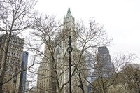Woolworth Building from City Hall Park by Erin Clark - various sizes - $33.99