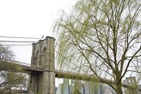 Brooklyn Bridge and Willow by Erin Clark - various sizes