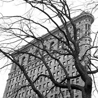 Flatiron with Tree (b/w) (detail) Fine Art Print