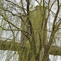 Veiled Brooklyn Bridge (detail) Fine Art Print