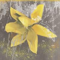 Tulip Fresco (yellow) Fine Art Print