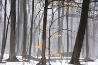 Foggy Forest by Erin Clark - various sizes