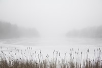 Foggy Reeds by Erin Clark - various sizes
