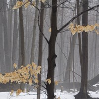 Winter Forest by Erin Clark - various sizes, FulcrumGallery.com brand