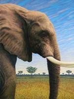 Elephant by James W. Johnson - various sizes