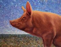 Free Range Pig Fine Art Print