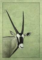 Gemsbok by James W. Johnson - various sizes