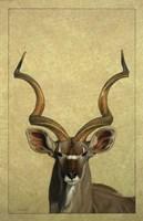 Kudu by James W. Johnson - various sizes