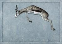 Springbok by James W. Johnson - various sizes