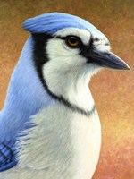 Blue Jay by James W. Johnson - various sizes, FulcrumGallery.com brand