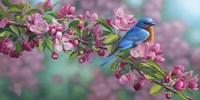 Garden Sapphire - Bluebird Fine Art Print
