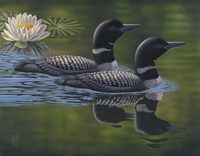Loon Pair Fine Art Print