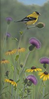 Thistle Gold Goldfinch by Jeffrey Hoff - various sizes