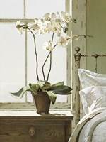 Orchids In The Window Fine Art Print