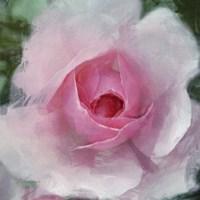 Elegant Bloom I Fine Art Print
