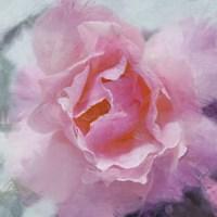 Elegant Bloom II Fine Art Print
