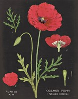 Poppy Chart by Sue Schlabach - various sizes