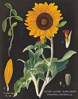 Sunflower Chart by Sue Schlabach - various sizes