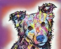 Collied Fine Art Print