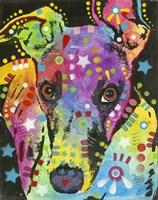 Curious Greyhound Fine Art Print