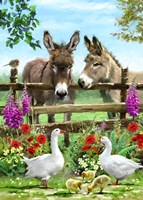 Donkeys Framed Print