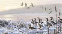 Winter River Geese Fine Art Print