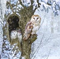Barn Owl 2 Fine Art Print