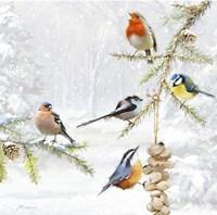Winter Feeder Fine Art Print