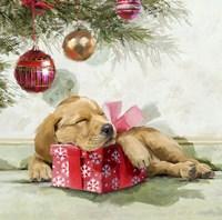 Sleepy Pup Fine Art Print