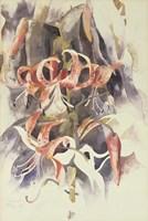 Tiger Lilies Fine Art Print