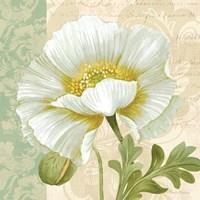 Pastel Poppies III Framed Print
