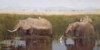 Gentle Giants by David Knowlton - various sizes