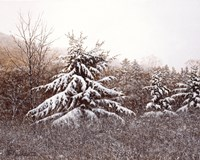 First Snow by David Knowlton - various sizes