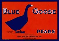 Blue Goose Pears Fine Art Print
