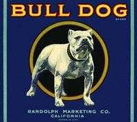 Bull Dog Brand by Print Collection - various sizes