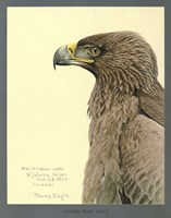 African Tawny Eagle by Print Collection - various sizes