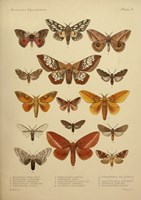 American Lepidoptera, Plate 3 by Print Collection - various sizes