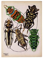 Insects, Plate 14 by E.A. Seguy - various sizes