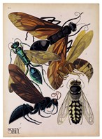 Insects, Plate 15 by E.A. Seguy - various sizes