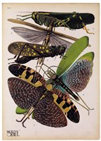 Insects, Plate 2 by E.A. Seguy - various sizes