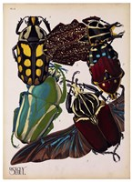Insects, Plate 3 by E.A. Seguy - various sizes