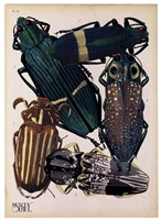 Insects, Plate 4 by E.A. Seguy - various sizes