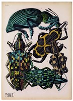 Insects, Plate 6 by E.A. Seguy - various sizes