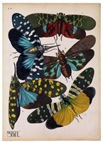 Insects, Plate 8 by E.A. Seguy - various sizes