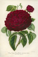 Rose Victor Trouillard by Print Collection - various sizes - $43.99