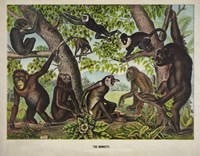 The Monkeys by Print Collection - various sizes