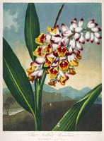 The Nodding Renealmia by Print Collection - various sizes - $41.49