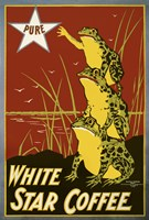 White Star Coffee Frogs