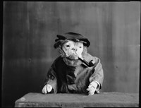 An Old Sea Dog, Literally by Print Collection - various sizes